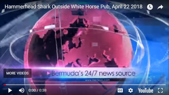 A video of a hammerhead shark outside of the White Horse Pub & Restaurant has gone viral.