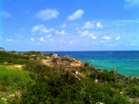 Rocky south shore of Bermuda - scrub brush